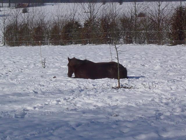 Le repos du cheval