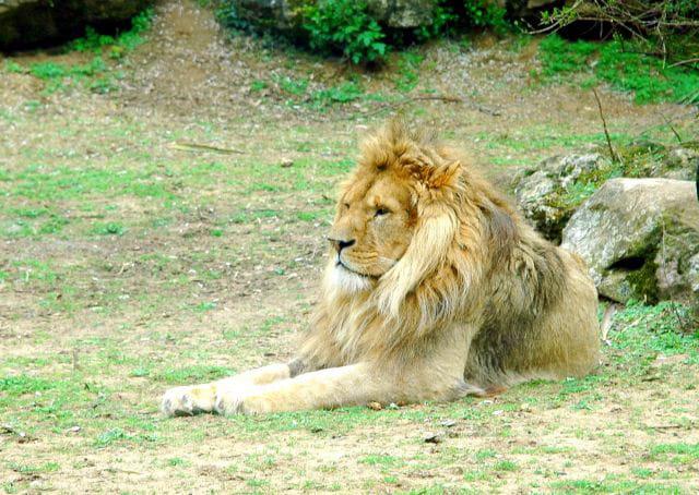 Le repos du roi