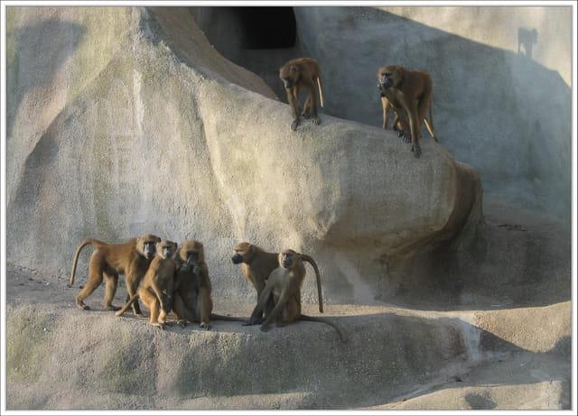 Le rocher aux singes