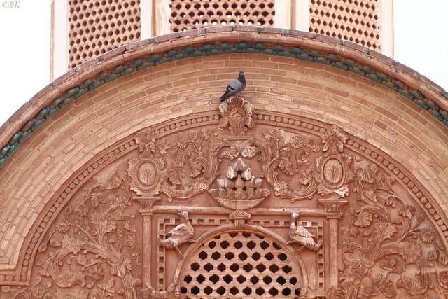 Le roi des pigeons