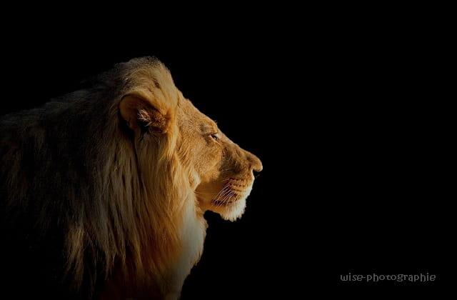 le roi lion II