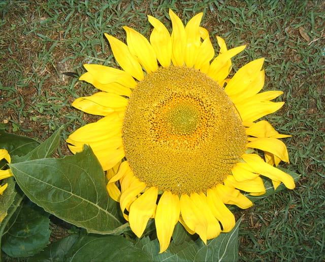 Le soleil dans le soleil