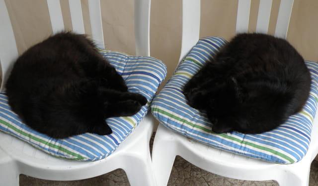 Le sommeil des deux chatons