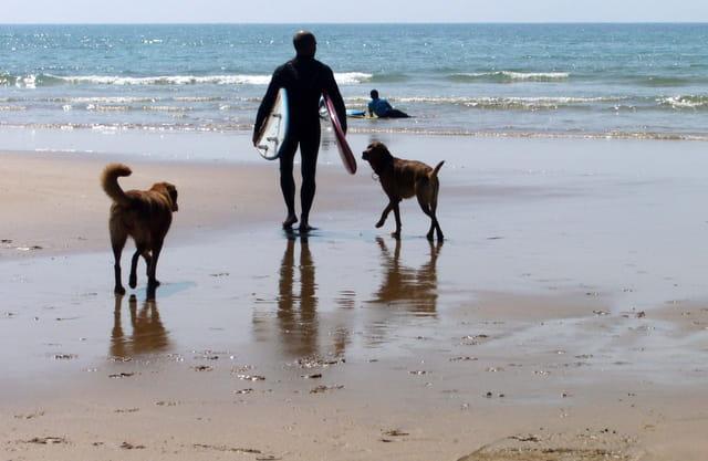 Le surfer aux chiens