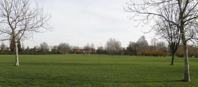Le tapis vert du parc