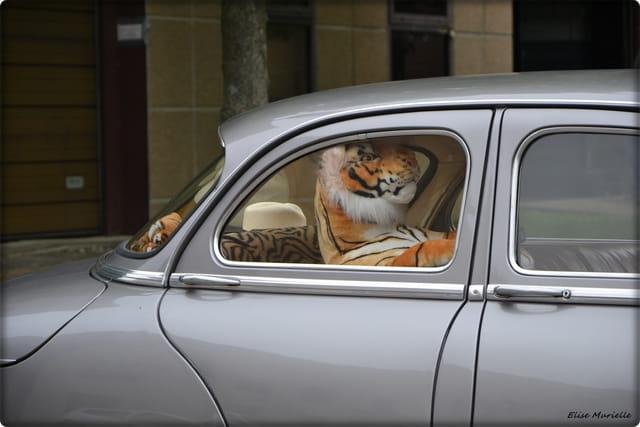 Le tigre n'est pas dans le moteur !