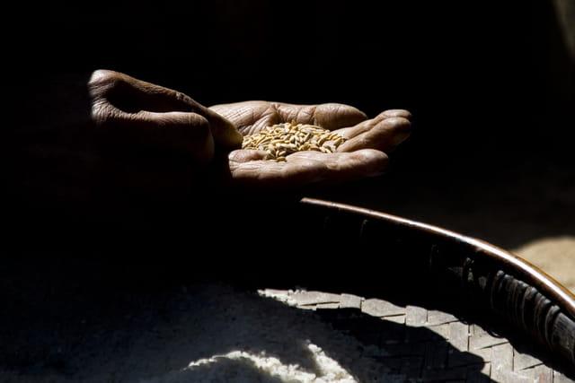 Le tri du riz