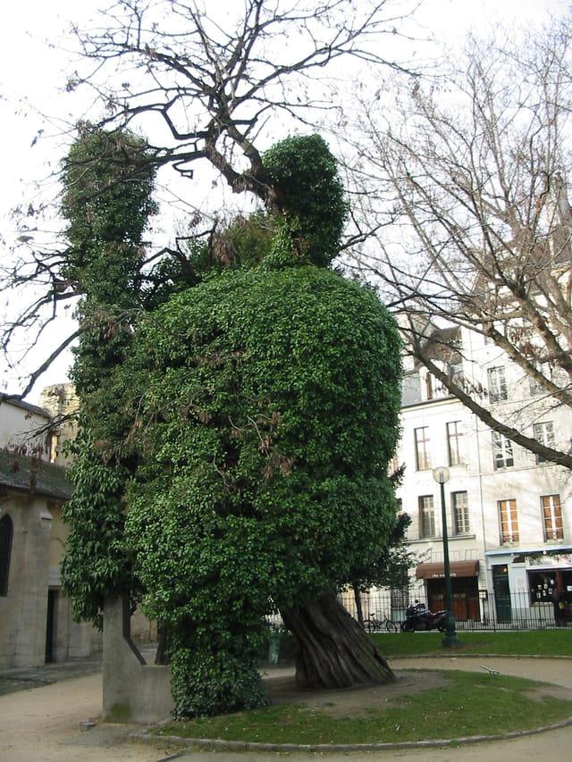 Le + vieil arbre de Paris