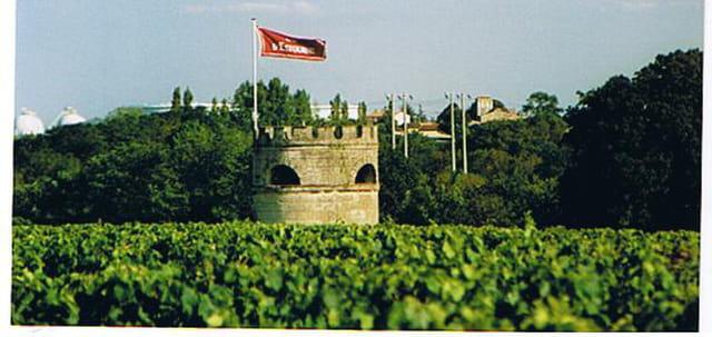le vignoble en Médoc