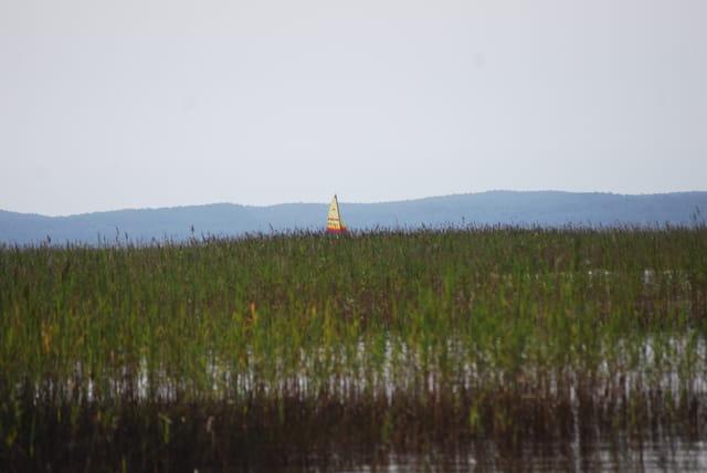 le voilier dans les herbes du lac