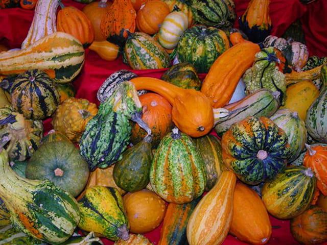 Legumes de saisons