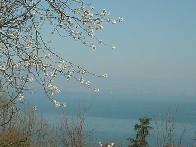 Léman au printemps