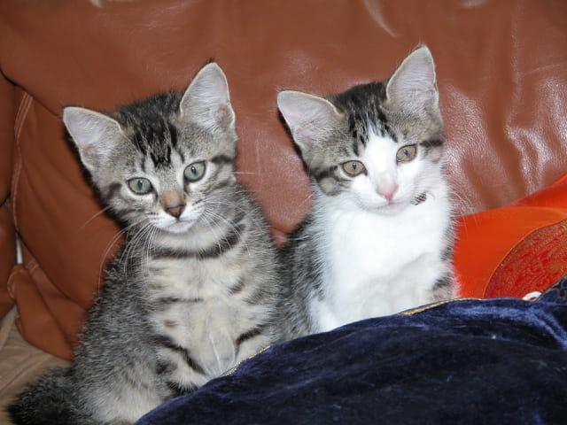 Les 2 chatons