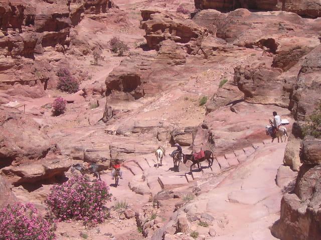 Les ânes dans les marches