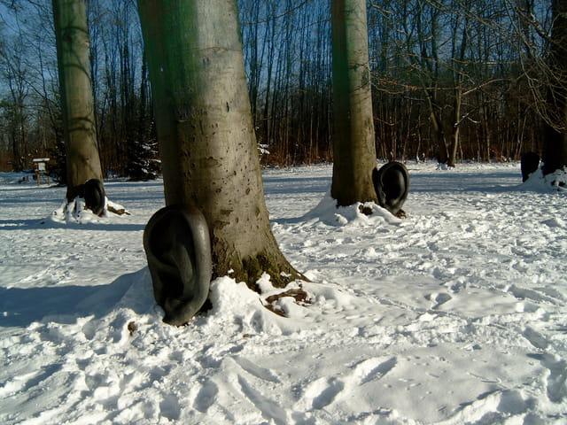 Les arbres aux oreilles