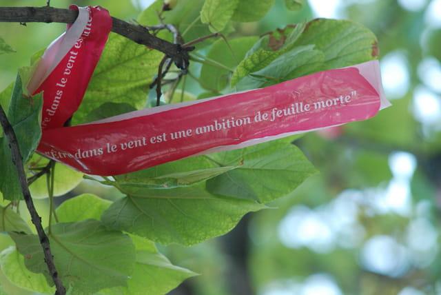 Les arbres ont la parole