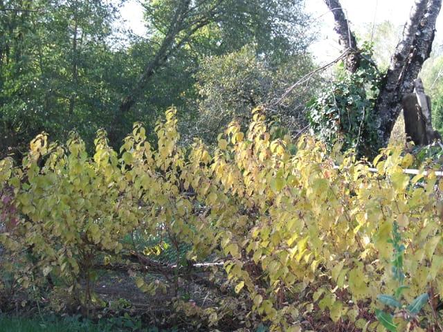 Les arbustes dans le jaune
