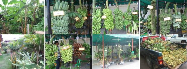 Les Bananes de Thaïlande