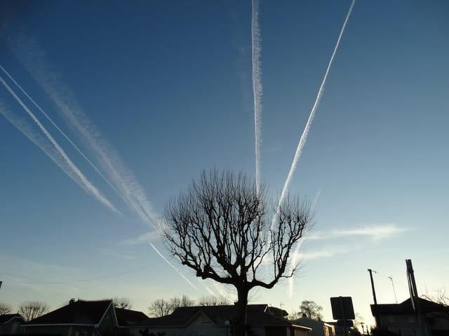 Les branches au ciel
