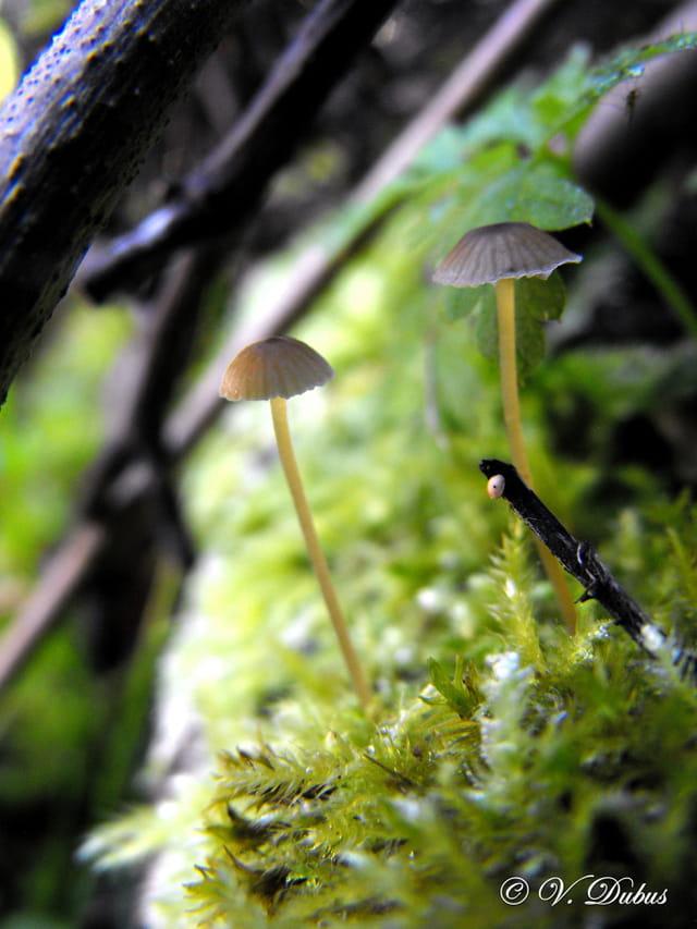 Les champignons d'été