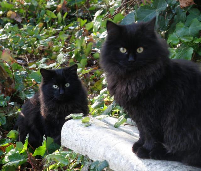 Les chatons jumeaux