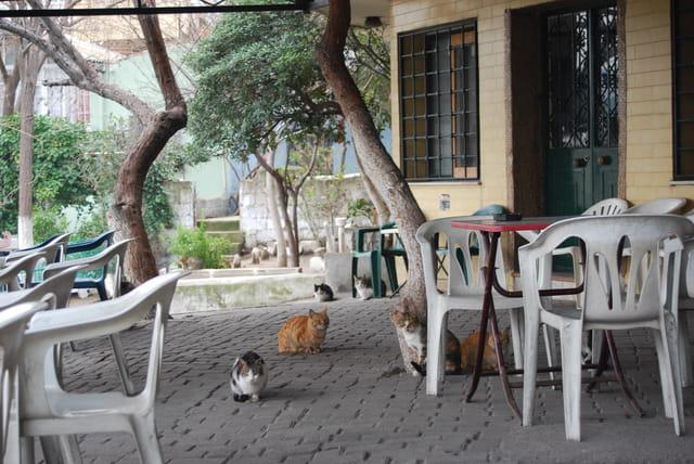 les chats de la mosquée de Konak