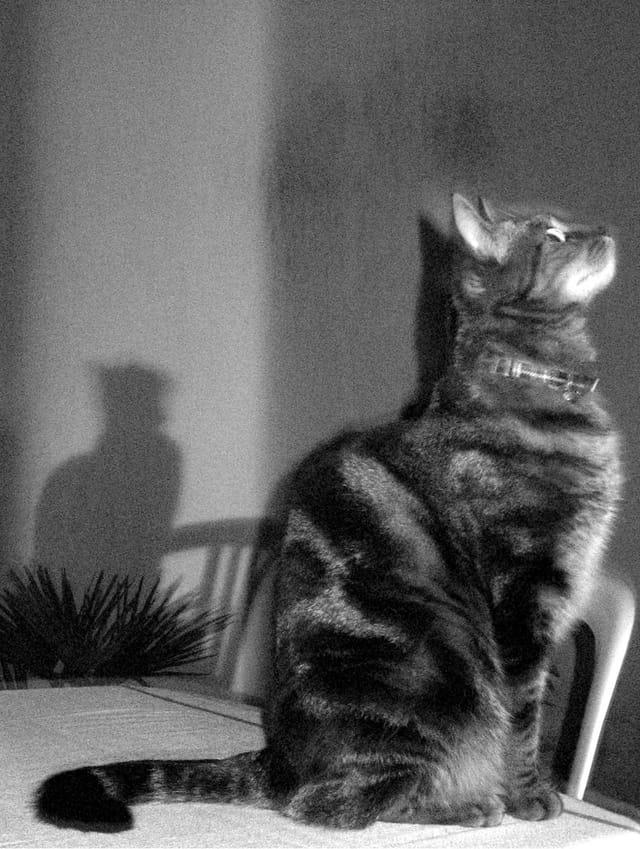 Les chats sont gris la nuit