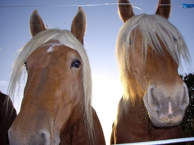 Les chevaux de Aude