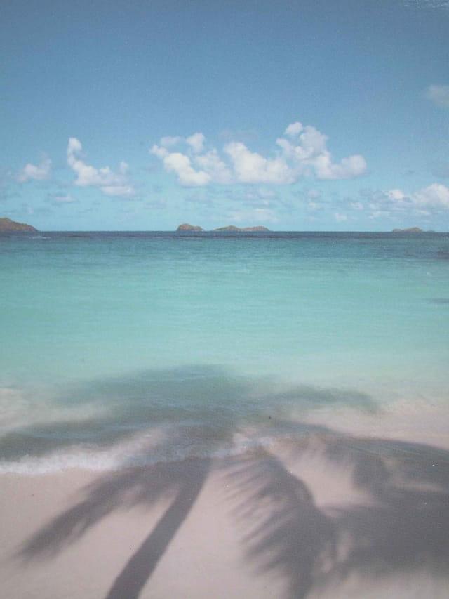 Les cocotiers dans l'eau