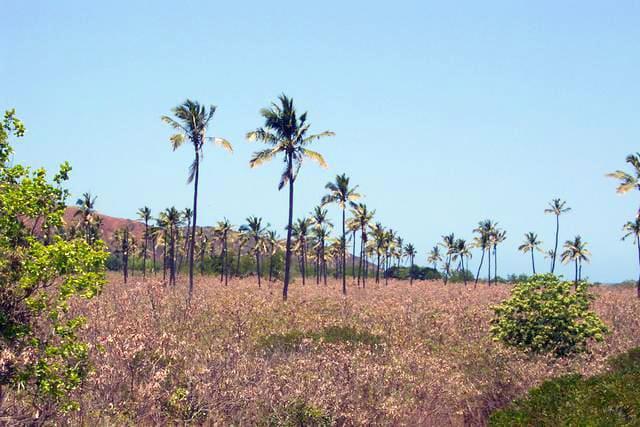 les cocotiers du bout du monde nouvelle Calédonie
