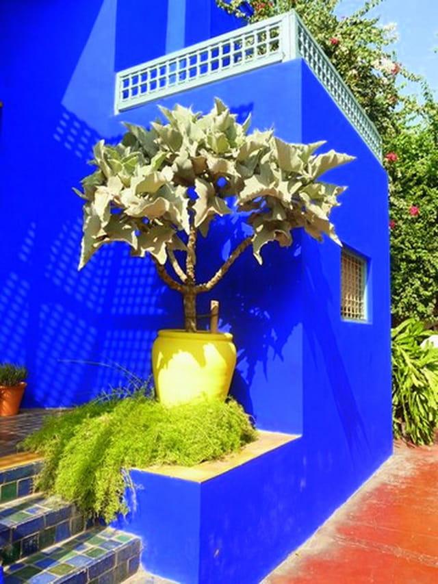 les couleurs du jardin Majorelle   3
