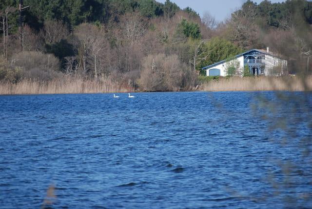les cygnes du lac