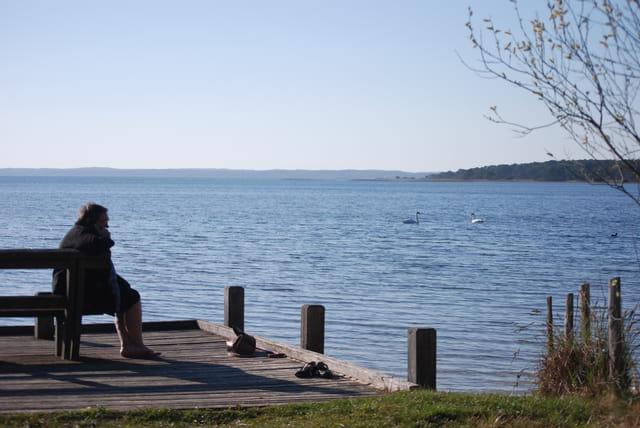 les cygnes sur le lac