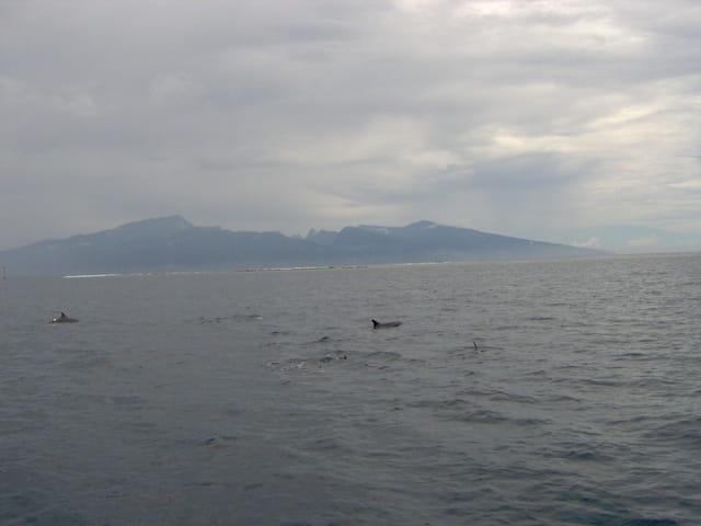 Les dauphin jouent entre les deux îles