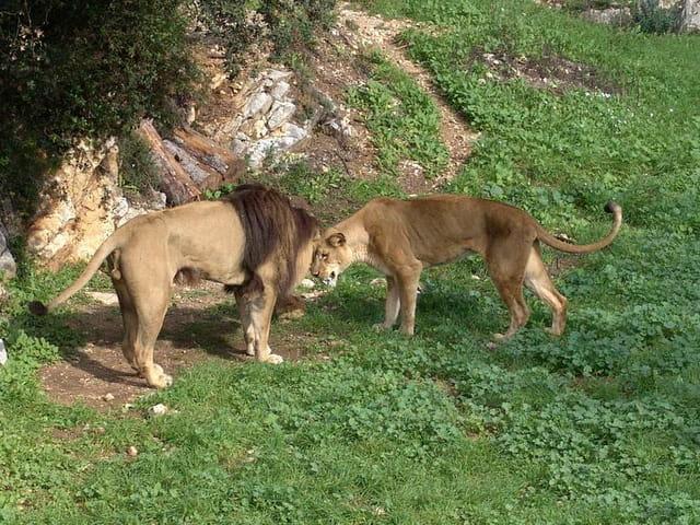 Les deux rois des animaux