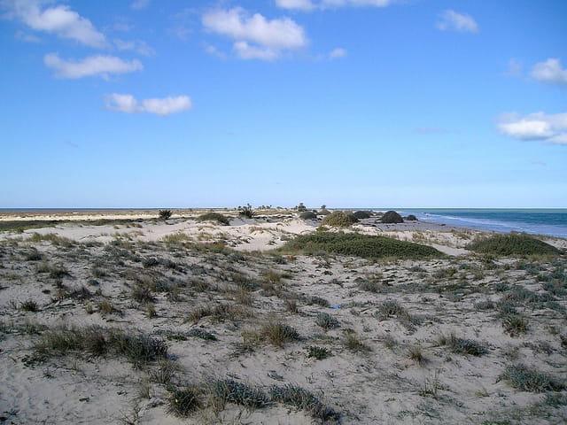 Les dunes au bord de l'eau