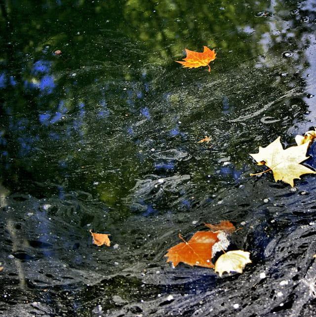 Les eaux troubles
