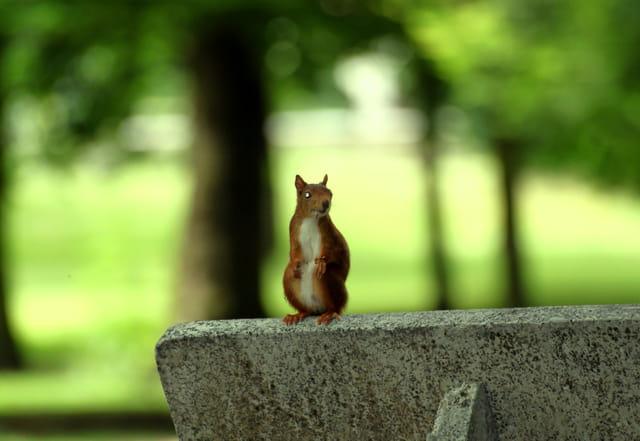 Les écureuils qui se balladent sur les bancs publics...