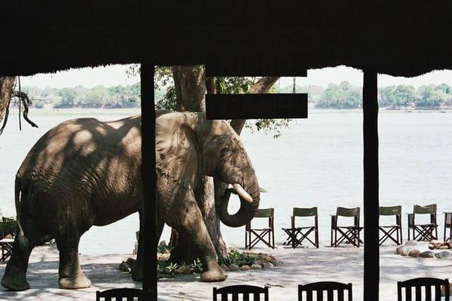 Les élephants sont dans le camp
