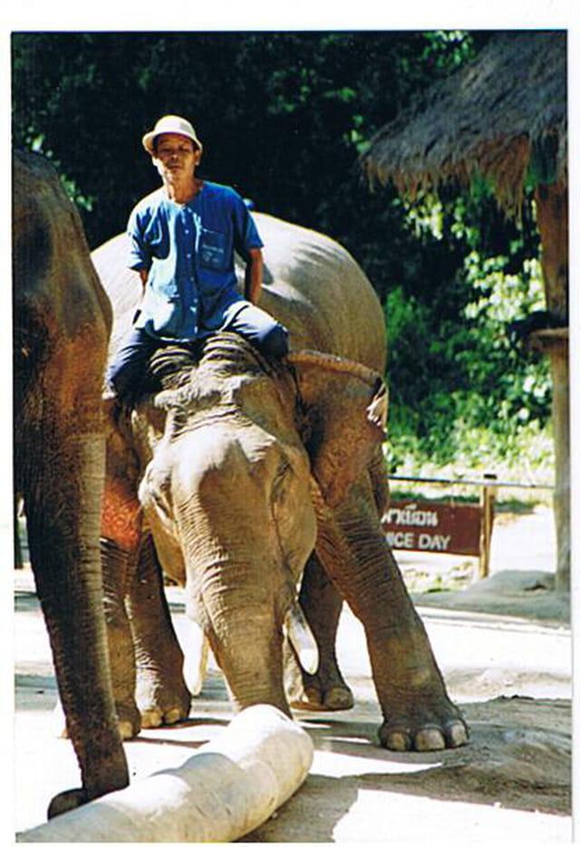 Les éléphants travailleurs
