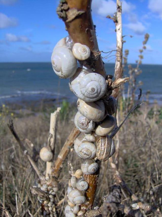 Les escargots en repos