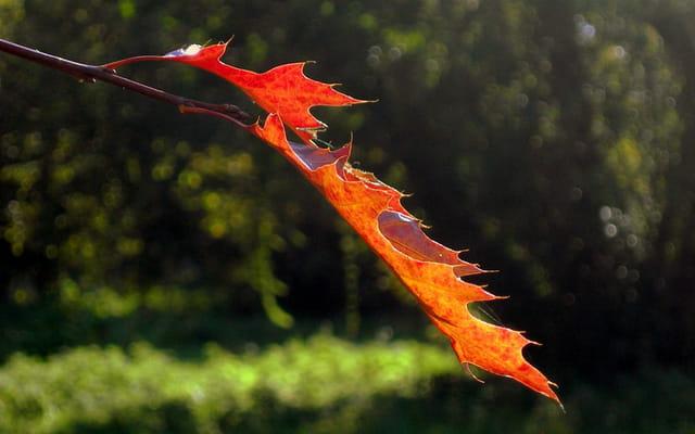 Les feuilles d'automne.......