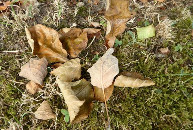 Les feuilles tombent déjà ...