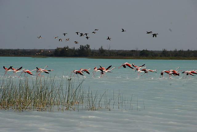 Les flamants roses du lac Tsimanampetsotsa