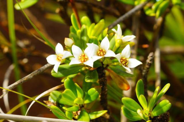 les fleures  du sud