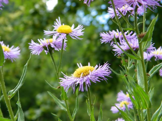 Les fleurs de Boscodon