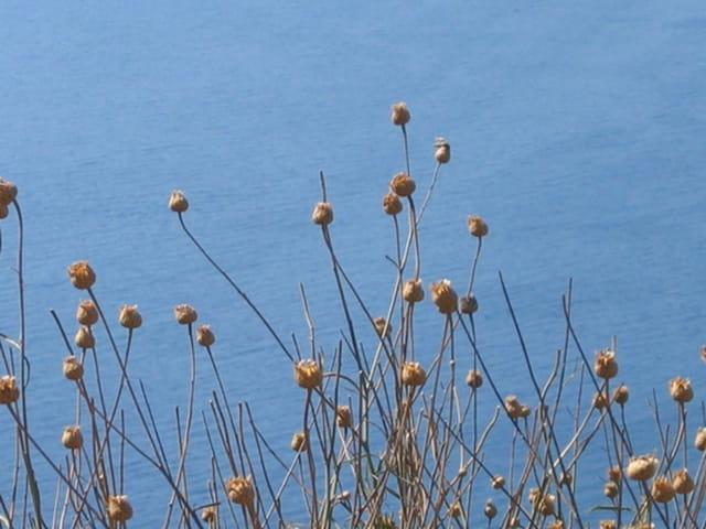 Les fleurs de mer