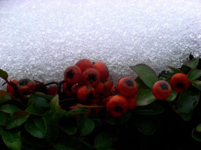 Les fruits et la neige