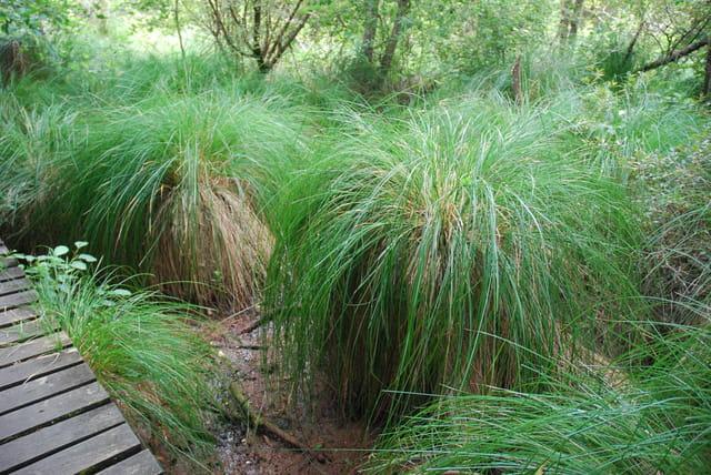 les grandes herbes de l'Etang Noir