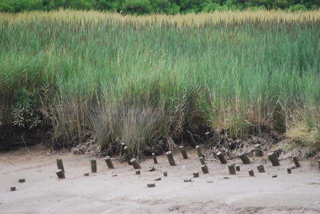 les herbes de marécage